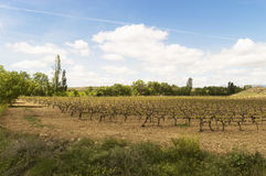 Mediterranean vineyards in Castilla y Leon north of Spain Stock Photography