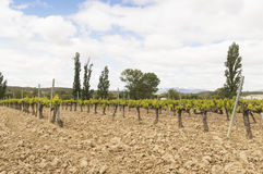 Mediterranean vineyards in Castilla y Leon north of Spain Stock Image