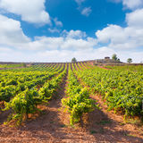 Mediterranean vineyards in Utiel Requena at Spain Royalty Free Stock Photography