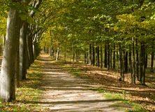 Mediterranean Walkway Forest. Autumn in a Way of Mediterranean Forest Royalty Free Stock Images