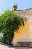 Mediterranean wall with green shrub. Picture of a mediterranean wall with green shrub Royalty Free Stock Image