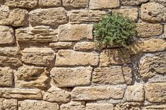 Mediterranean wall with plant royalty free stock photography