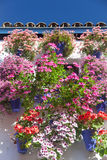 Mediterranean Wall and Window decorated Colorful Flowers , Cordo Stock Images