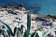 Mediterranian century plant Royalty Free Stock Image