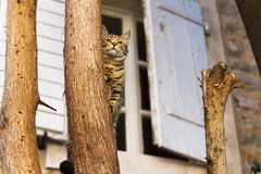 Mediterranian-Katzenjagd vom Baum Stockbild