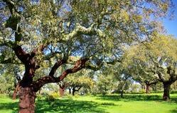 Mediterranic forest. Oak trees in mediterranic forest Stock Photo