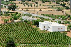Mediterrean country. South italian mediterrean country with grapevine and white houses Royalty Free Stock Photos