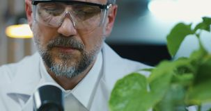 Scientist using a thermometer. Medium close-up of a male scientist using a thermometer to measure temperature of a green plant stock video footage