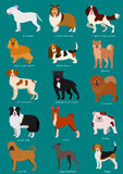 Medium Dog breeds set Stock Photo