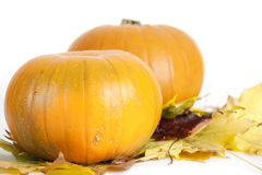 Medium isolated orange pumpkins Stock Images