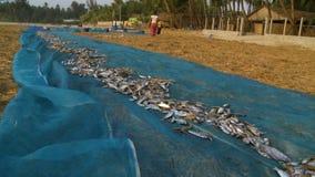 Locals women drying fish at Ngapali beach, Myanmar