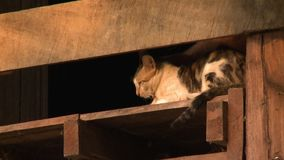 Hand cuddling a cute village cat in Bagan, Myanmar