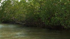 Mangrove Bush along Kangy River, Myanmar