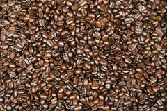 Medium roasted Arabica coffee beans Royalty Free Stock Photography