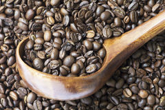 Medium Roasted Whole Coffee Bean Selected focus. Medium roasted whole coffee bean in wooden spoon on coffee bean background Royalty Free Stock Photo