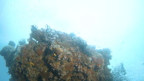 Coral reef and fish underwater. A medium shot of a coral reef.  Tracking shot upward to show a large part of the coral reef stock video
