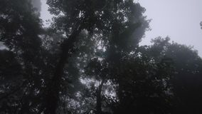 Trees and green field. A medium shot of a green field and trees. Camera tilts up stock footage