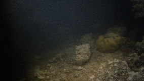 A shot the seabed with fish on corals stock video