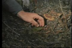 Medium shot of male hand picking up flat stone by tree trunk stock video footage