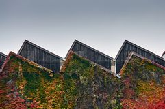 Medium shot on an old fashioned factory`s sawtooth roof with autumn colorful leaves around