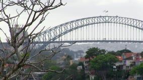 Bridge and a tree with sky. A medium shot of a sky and dead tree with a bridge and a bird stock footage