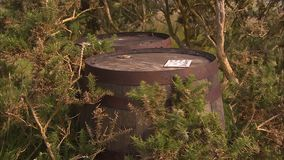 Two wine barrels between plants. A medium shot of two wine barrels in the middle of trees and plants stock footage