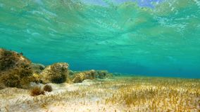 Underwater leaf shot. A medium shot of underwater leaf and sea weeds stock video footage