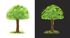 Medium tree paint brush isolate has clipping paths. Medium tree paint brush isolate on white and gray background for maching with your image, has clipping paths Royalty Free Stock Photo