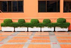 Medium trees pots. Medium planter with tree lined Stock Photos