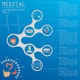 Medizinisch und Gesundheitswesen infographic, Magen-Darm-Kanal infog lizenzfreie abbildung