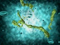 Medizinische Illustration des Ebola Virus Lizenzfreie Stockbilder