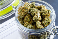 Medizinische Marihuana-Knospen auf schwarzem Hintergrund lizenzfreie stockfotos