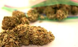 Medizinische Marihuanaknospen Stockfotografie