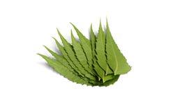 Medizinische neem Blätter Lizenzfreie Stockbilder