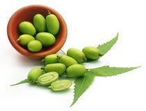 Medizinische neem Früchte Lizenzfreies Stockbild