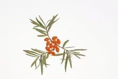 Medizinische orange Frucht Lizenzfreies Stockfoto