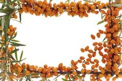 Medizinische orange Frucht Stockfotos
