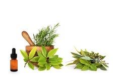 Medizinische und kulinarische Kräuter stockfotos