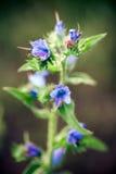 Medizinische wilde Frühlingsblumen Stockfotos