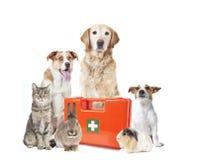 Medizinischer Fall der verschiedenen Haustiere Stockbild