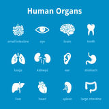 Medizinischer Ikonensatz der menschlichen Organe lizenzfreie abbildung