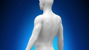 Medizinischer Röntgenstrahl-Scan - Herz lizenzfreie abbildung
