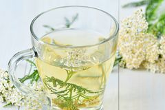 Medizinischer Tee der Schafgarbe in der Glasschale Stockfoto