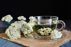Medizinischer Tee der Schafgarbe in der Glasschale auf Dunkelheit Stockbild