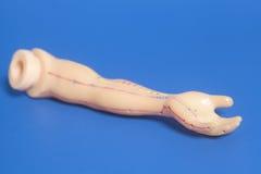 Medizinisches Akupunkturmodell der menschlichen Hand Stockfoto