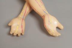 Medizinisches Akupunkturmodell der menschlichen Hand auf Grau Lizenzfreie Stockfotografie