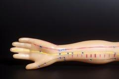Medizinisches Akupunkturmodell der menschlichen Hand auf Schwarzem Stockbild