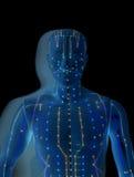 Medizinisches Akupunkturmodell des Menschen Stockbild