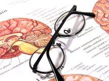 Medizinisches Diagramm und Gläser Stockbild