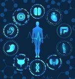 Medizinisches Gesundheitswesen, menschliche Organe, virtueller Körper-High-Teche Diagnoseplatte lizenzfreie abbildung